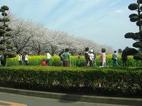 大池の桜が今日も・・・ 4月6日(日)_b0124462_20102146.jpg