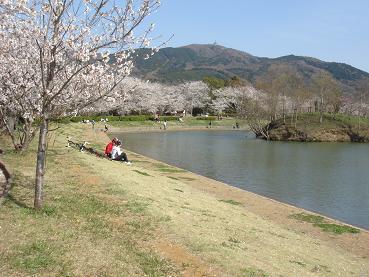 大池の桜が今日も・・・ 4月6日(日)_b0124462_2011868.jpg
