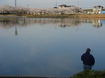 大池の桜が今日も・・・ 4月6日(日)_b0124462_204961.jpg