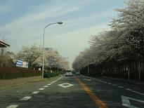 大池の桜が今日も・・・ 4月6日(日)_b0124462_2093798.jpg