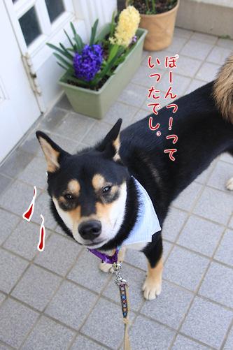 b0093270_818323.jpg