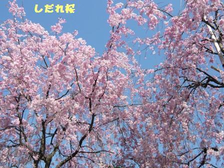 f0157373_10374366.jpg