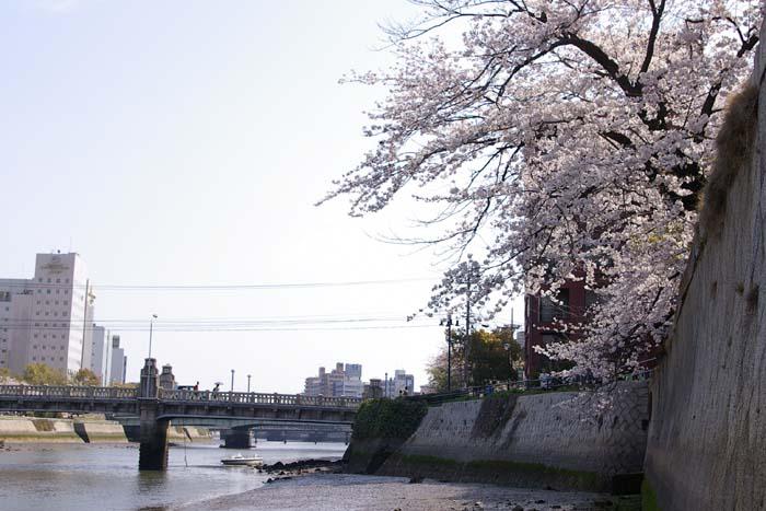 石橋と桜_f0130879_2122931.jpg