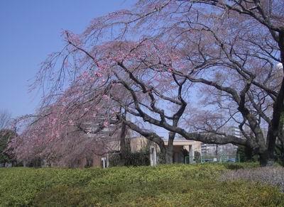 花よりだんご_c0144382_14555458.jpg