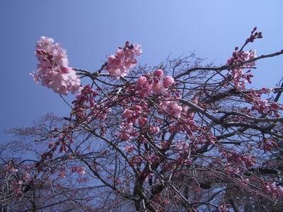 花よりだんご_c0144382_15222963.jpg