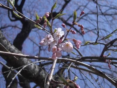花よりだんご_c0144382_15231531.jpg