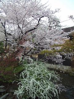 京都「かね庄」のお茶漬鰻_e0002086_2232436.jpg
