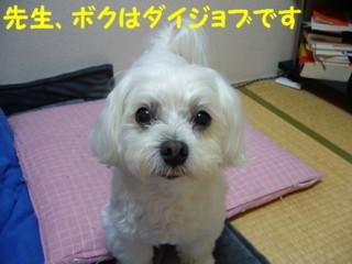 f0145192_1635732.jpg