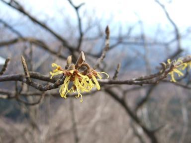 金時山の花  Vol.  34_e0024094_934565.jpg