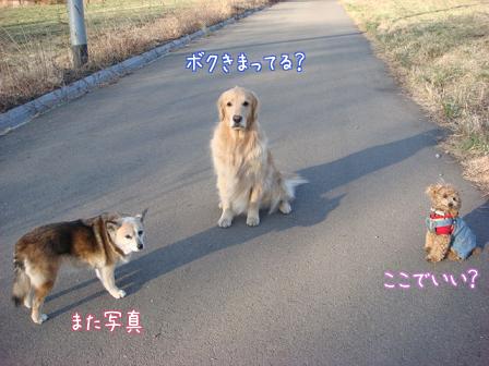 f0064906_20112646.jpg