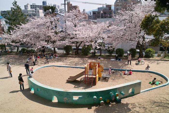 祖原公園の桜は満開です!!_b0125014_1258435.jpg