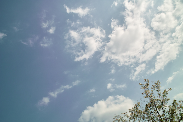 祖原公園の桜は満開です!!_b0125014_12591882.jpg