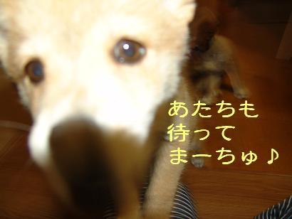 f0086814_054468.jpg
