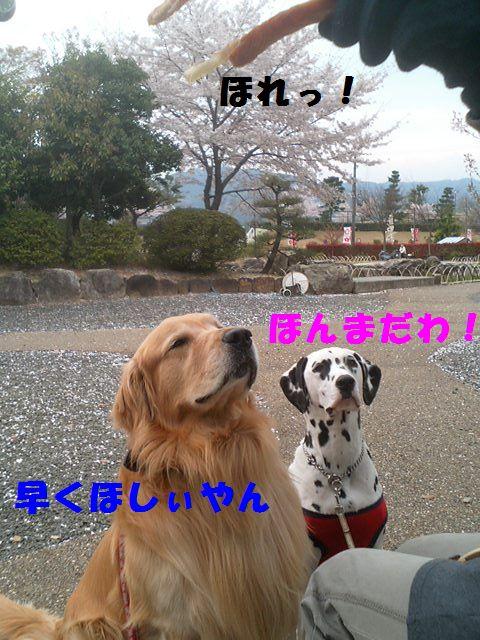 b0127531_13424341.jpg