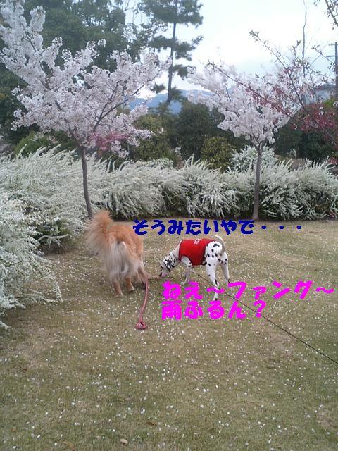 b0127531_1351288.jpg