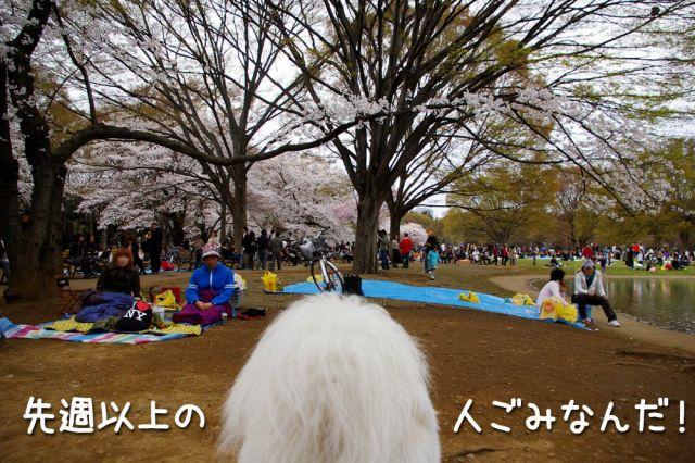 桜の宴2008_c0062832_17484550.jpg