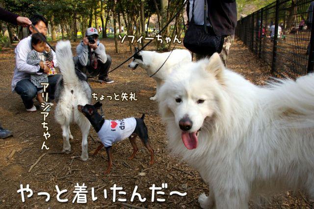 桜の宴2008_c0062832_17485744.jpg