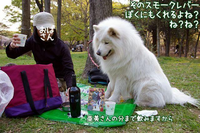 桜の宴2008_c0062832_17492426.jpg