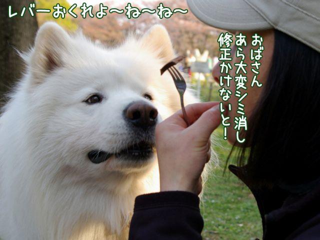 桜の宴2008_c0062832_17493292.jpg