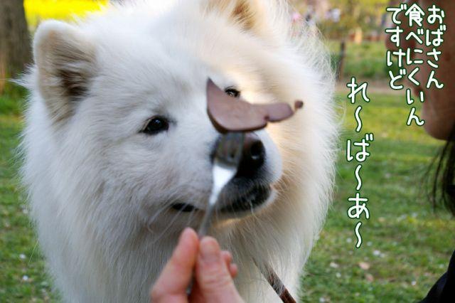 桜の宴2008_c0062832_17494323.jpg