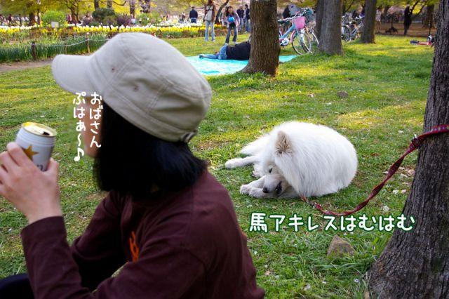 桜の宴2008_c0062832_1749680.jpg