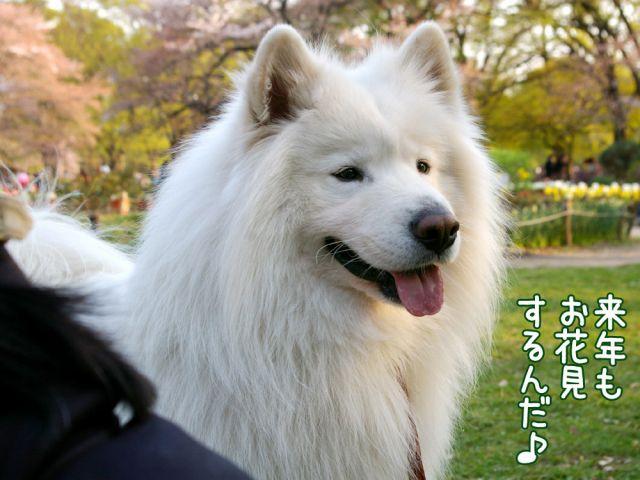 桜の宴2008_c0062832_17501246.jpg