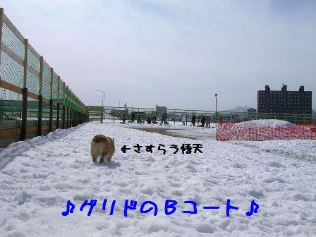 c0116534_2314425.jpg