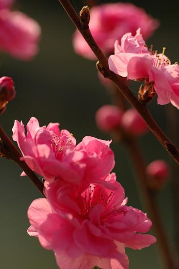 ひとり花見も楽しいのだ。_b0016049_17462325.jpg