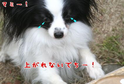 d0013149_1542874.jpg