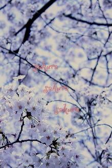 お花見 2008_c0156468_18184263.jpg