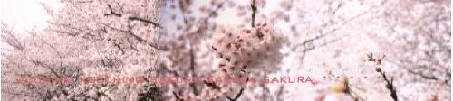 お花見 2008_c0156468_18245935.jpg