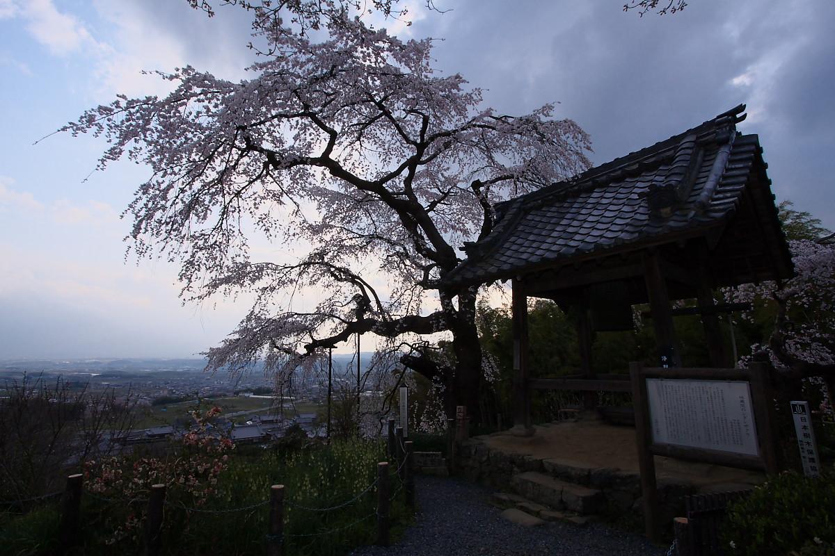 京都 地蔵禅院 枝垂れ桜 _f0021869_06343.jpg