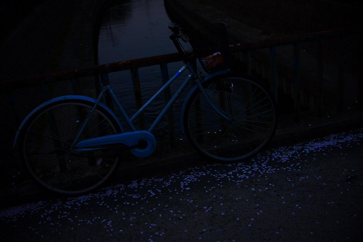ご近所桜 ゆる~く スナップ_f0021869_12495751.jpg