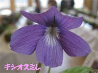 c0152779_16503983.jpg