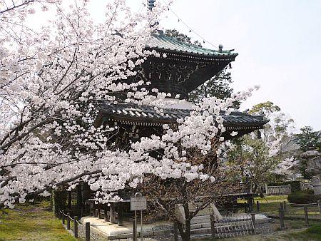 京都・・・花巡り♪_d0078486_3402640.jpg