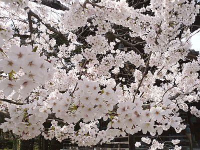 京都・・・花巡り♪_d0078486_7504630.jpg