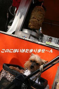 b0092196_858812.jpg