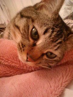 猫って_d0101514_1395057.jpg