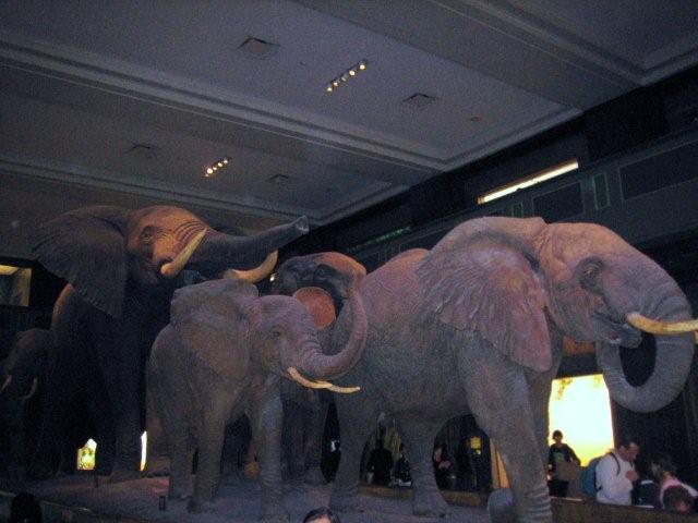 アメリカ自然史博物館_f0076322_1351765.jpg