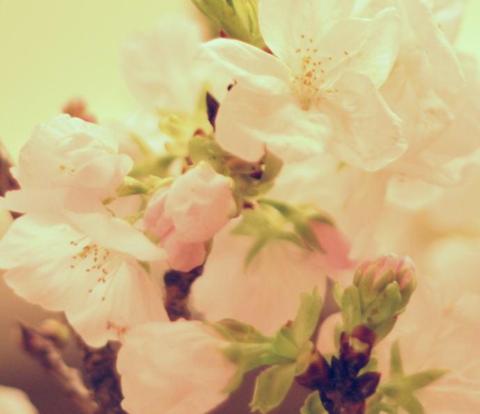 花冷え_a0042928_2361188.jpg