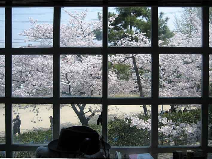 京で花見・・・・・・・PUSH-PULL_d0138130_972786.jpg