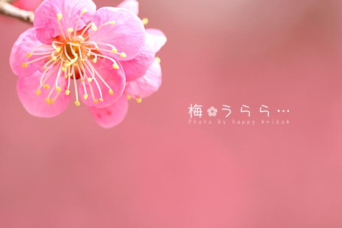 b0049843_186912.jpg