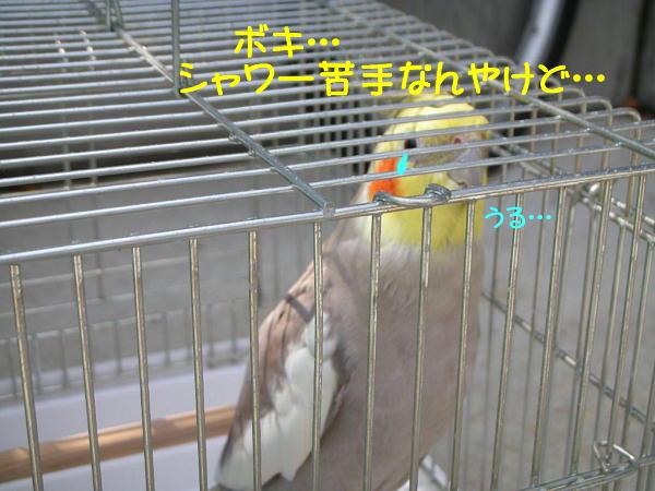 f0132055_010533.jpg