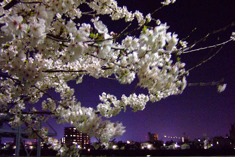 平和記念公園の桜_e0045768_23162749.jpg