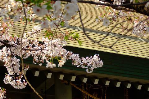 平和記念公園の桜_e0045768_2351599.jpg
