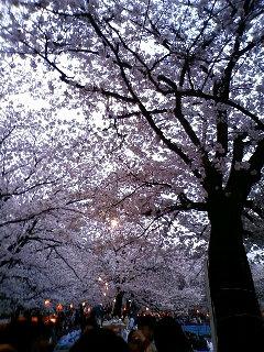 春を満喫その1_e0138984_048988.jpg