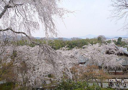 京都・・・花巡り2♪_d0078486_10565539.jpg