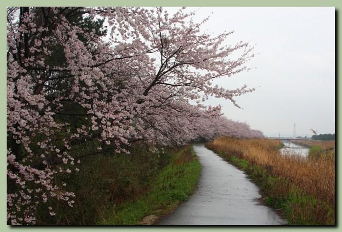 付録:金沢桜スポット5_f0079990_10511876.jpg
