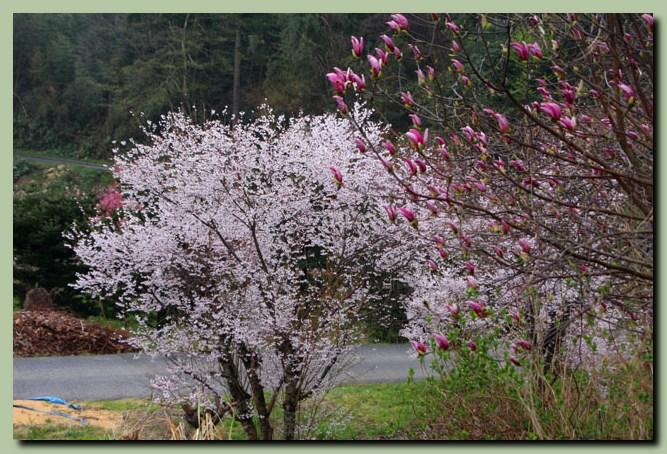 付録:金沢桜スポット5_f0079990_10512545.jpg