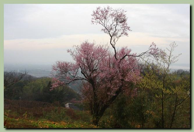 付録:金沢桜スポット5_f0079990_10513337.jpg